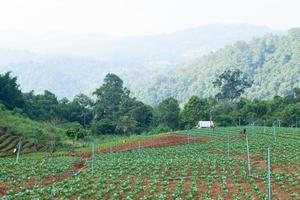 área agrícola en las montañas
