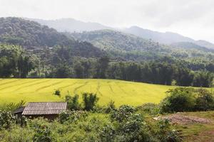 House by the rice fields photo