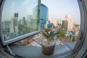 Fisheye view of a plant in a window