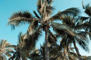 palmeras bajo el cielo azul foto