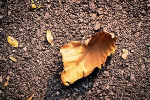 hoja seca marrón otoño