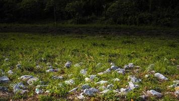 Field with grey limestones