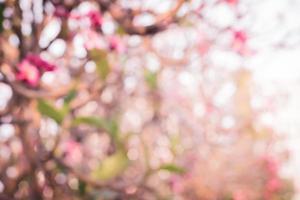 Desenfoque bokeh de flores tropicales rosas