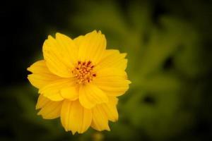 Yellow spring flower photo