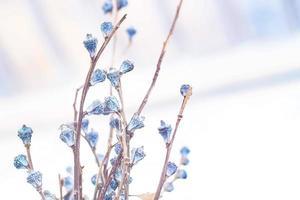 Dried grass flowers photo