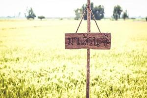 Wooden blank empty  signboard and green grass rice field  on sky photo