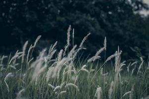 hierba de pantano salvaje foto