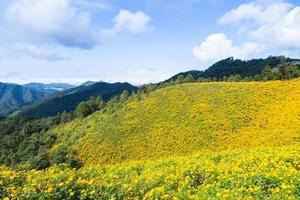paisaje en tailandia con flores amarillas foto