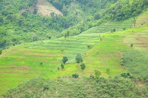 granja de arroz en terrazas en la colina foto