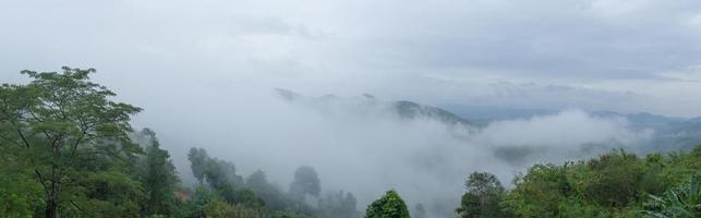 Panorama of fog covered trees photo
