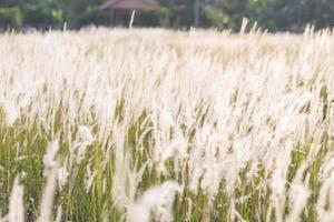 hierba flores de la hierba foto