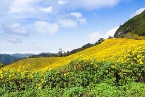campo de flores en la montaña foto