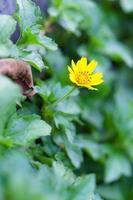 pequeña flor amarilla en el parque