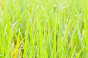 Water droplets perched atop the grass photo