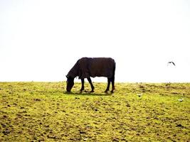 Horse grazing on a hill