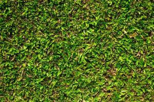 hierba verde para textura o fondo foto