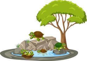 Escena aislada con muchas tortugas alrededor del estanque. vector