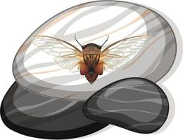 Top view of cicada on a stone on white background