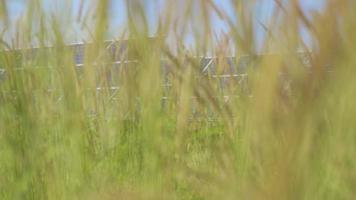 das Solarpanel mit orangefarbenem Gras im Vordergrund video