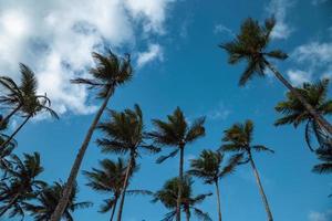 palmeras con cielo azul nublado foto