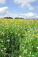 Flowers blooming under the sky photo