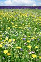 Flower blossom in the field photo