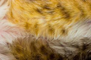 Close-up of cat fur for texture or background photo