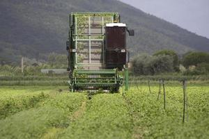 Basil being harvested by machine