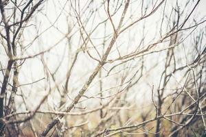 imagen de ramas muertas y sol en las nubes foto