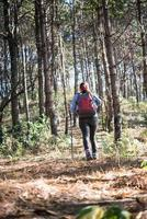 Rear of women hiking with backpack through a pine tree forest photo