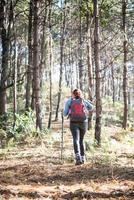 Rear of women hiking with backpack through a pine tree forest
