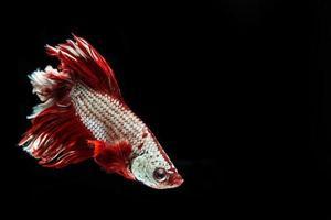 marco captura del momento conmovedor de la lucha contra los peces
