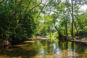 río y bosque en tailandia foto