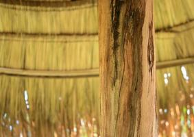 Pole of bamboo hut photo