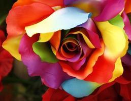 rosa de color arcoiris