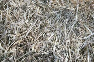Pile of dry hay