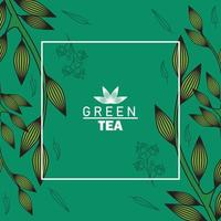 green tea lettering poster with leaves in square frame vector
