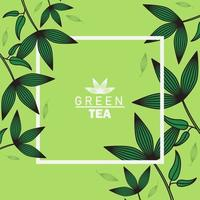 green tea lettering poster with leaves and square frame vector