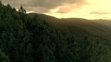 vista aérea de uma floresta de pinheiros durante o nascer do sol