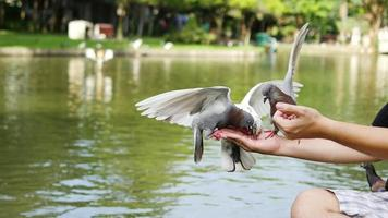 Man is feeding pigeons on his arm with public park background