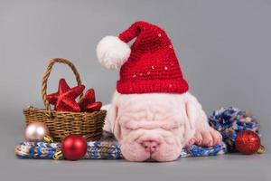 Side view portrait of American bulldog puppy sleeping in Santa hat with Christmas decorations