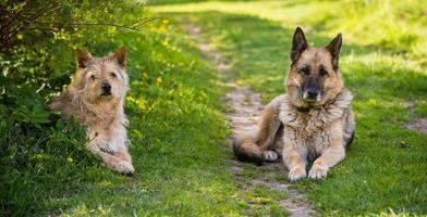 Two dogs looking at camera sitting on road and grass