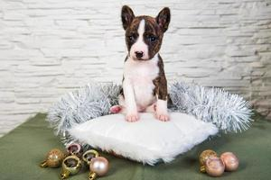 Portrait of basenji puppy on a white pillow with ornaments