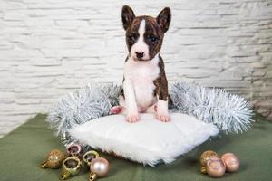 Retrato de cachorro basenji sobre una almohada blanca con adornos