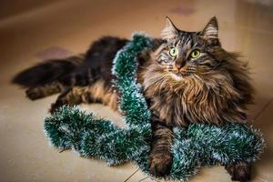 Retrato de gato noruego con guirnaldas bajo el árbol de navidad foto