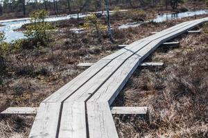 Swamp and wooden path in Kemeri National Park