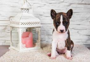 Portrait of basenji puppy looking at camera with lantern and candle