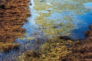Blue sky reflected in swamp in Kemeri National Park