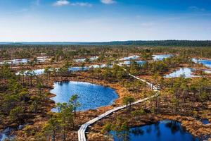 Swamp, trees, and wooden walkway in Kemeri National Park in Latvia