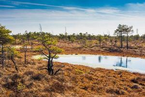 Swamp, trees, and cloudy blue sky in Kemeri National Park in Latvia
